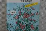 草花種子 赤花かすみ草
