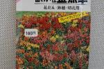 草花種子 極わい性金魚草