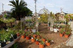 上越地区最大級 敷地面積1,000坪の園芸展示場